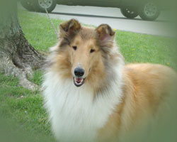 """I help people and pets find happy homes"" states Flo about her purpose in life. Flo has always been an animal lover and advocate. Her collie Kyra is her pride and joy."